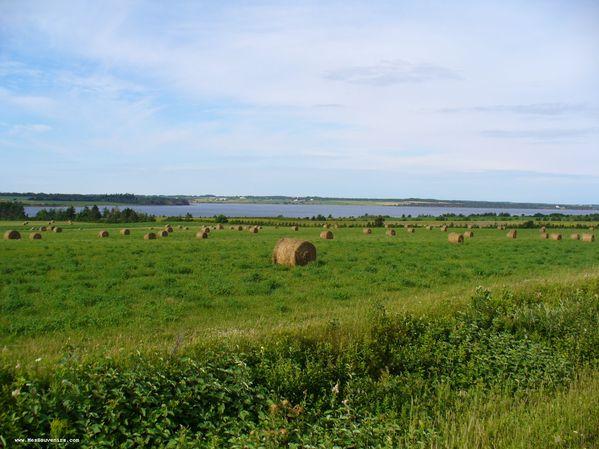 Un champ sur l'Île