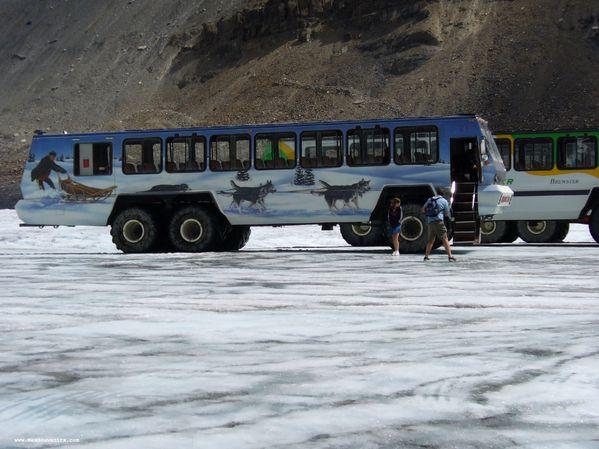 Un autobus du champ de glace Columbia