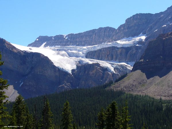 Glacier Crowfoot