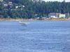 Un hydravion qui atteri dans la baie