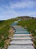 L'escalier de bois du sentier Skyline