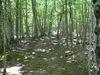 Le sentier du ruisseau MacIntosh