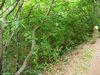 Le Chemin du Buttereau