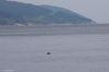 Une tête de phoque